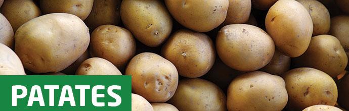 Patates geç lekesi domatesleri de etkiler